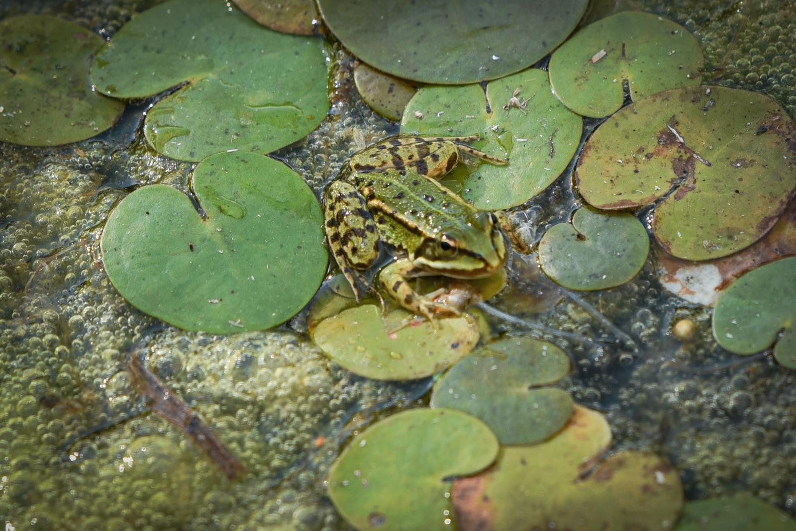 Żabie Oczko