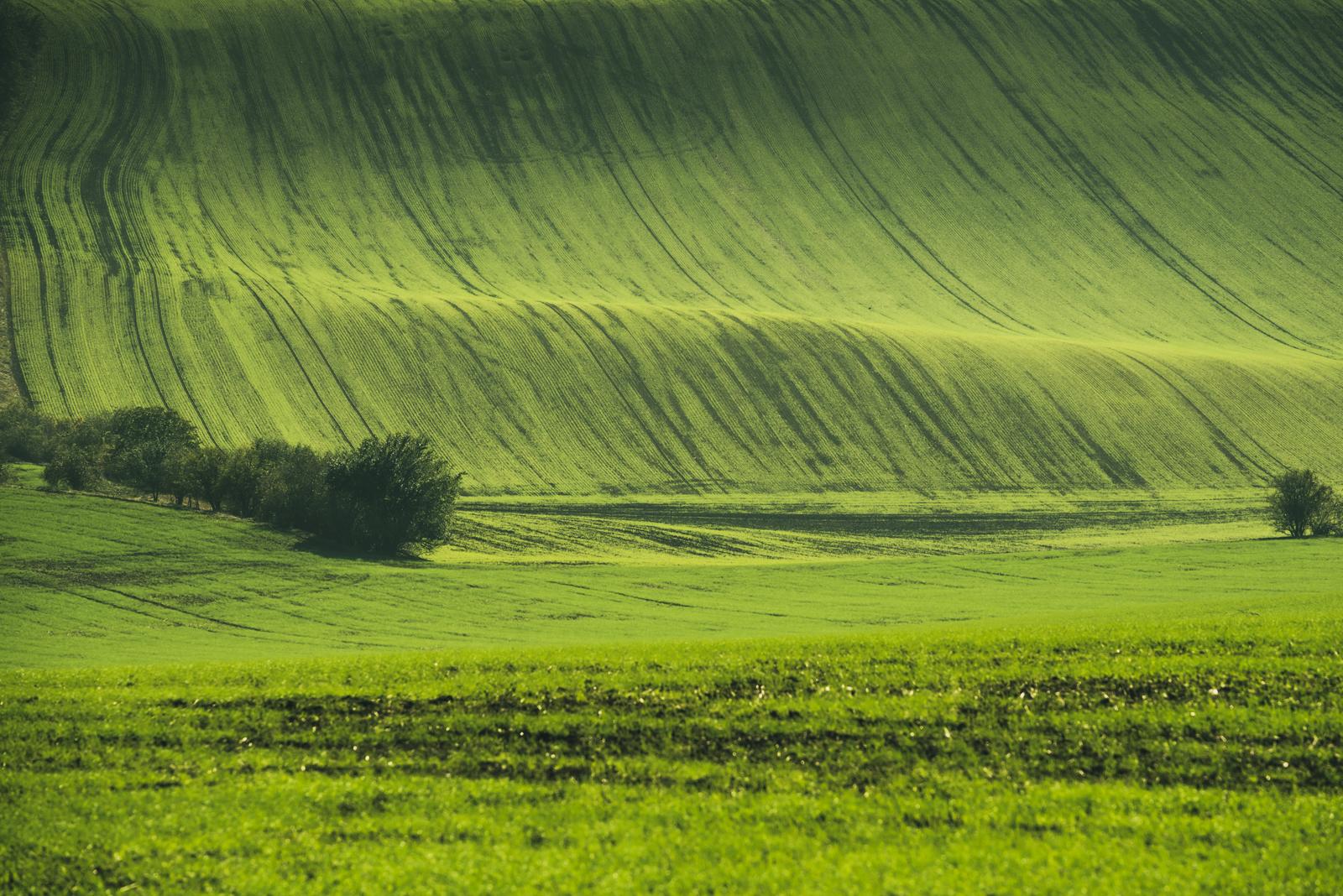 Morawskie fałdy