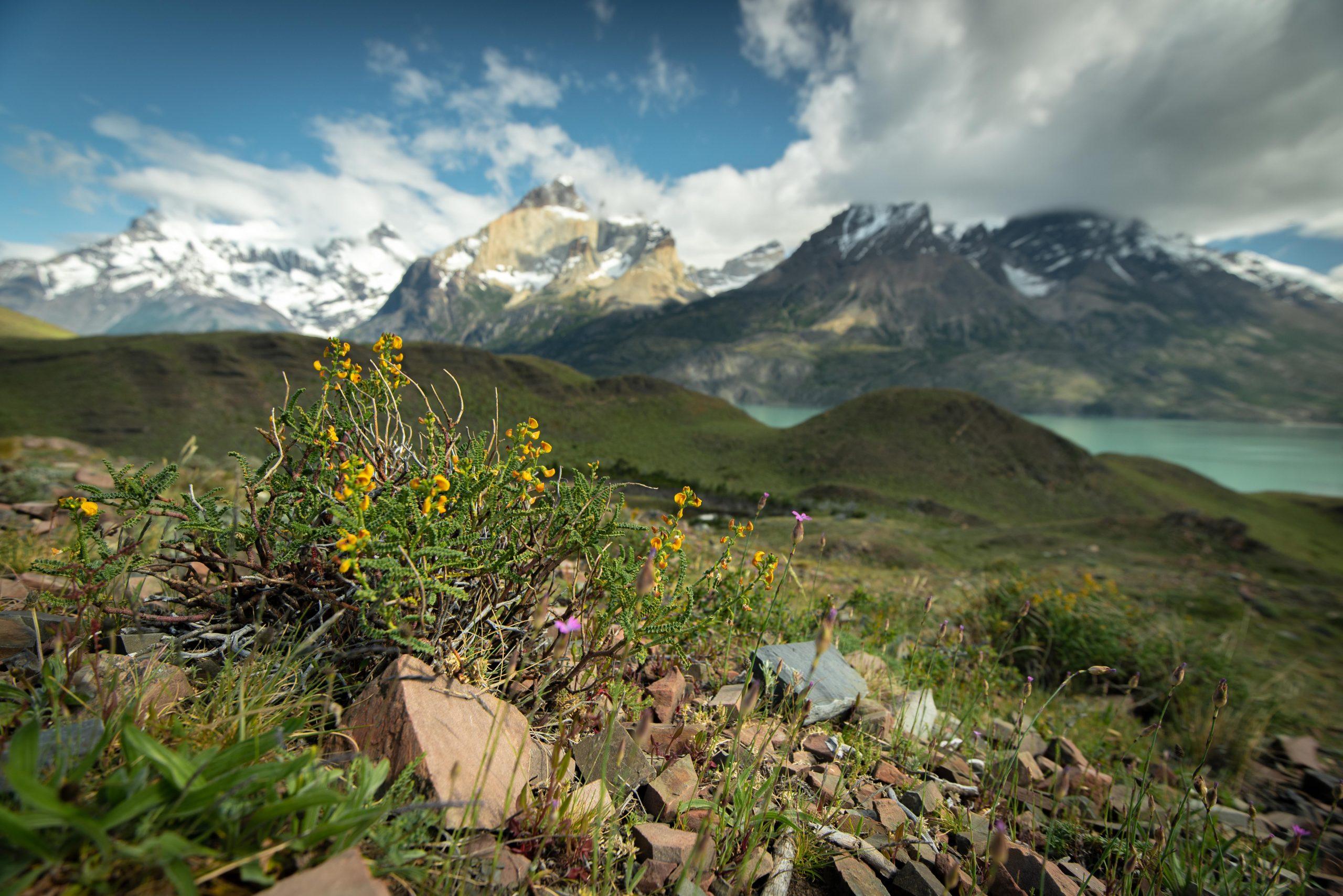 Trekking w Patagonii
