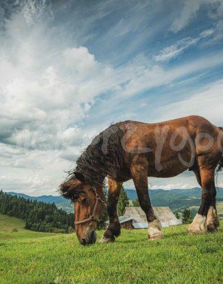 Pieniny - Koń