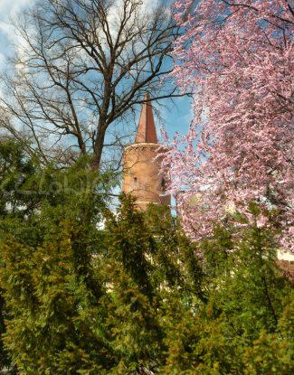 Wiosna na Wieży