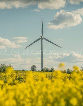 Rzepakowy wiatrak